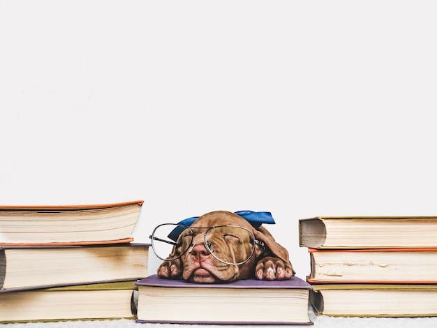 眠っているかわいい子犬とビンテージの本 Premium写真