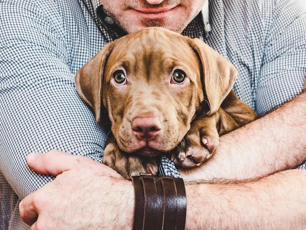 Человек обнимает молодого, очаровательного щенка. крупный план Premium Фотографии