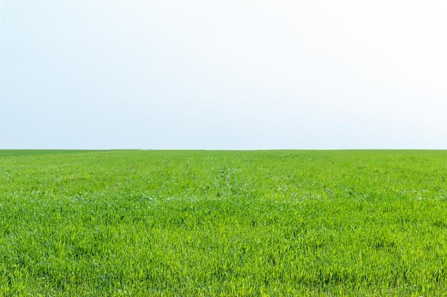 若い草小麦を育てる農業分野 Premium写真
