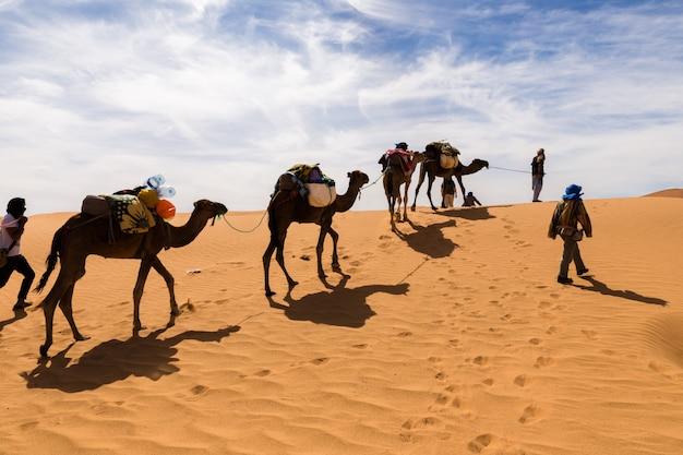 サハラ砂漠のラクダ Premium写真