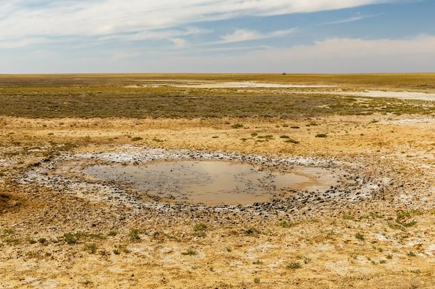 Небольшая лужа в степи в солнечный день, казахстан Premium Фотографии