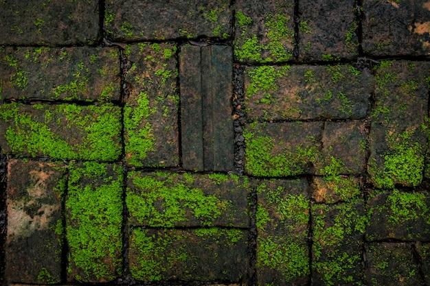 緑の苔とレンガの背景テクスチャ自然の中で美しいです。 Premium写真