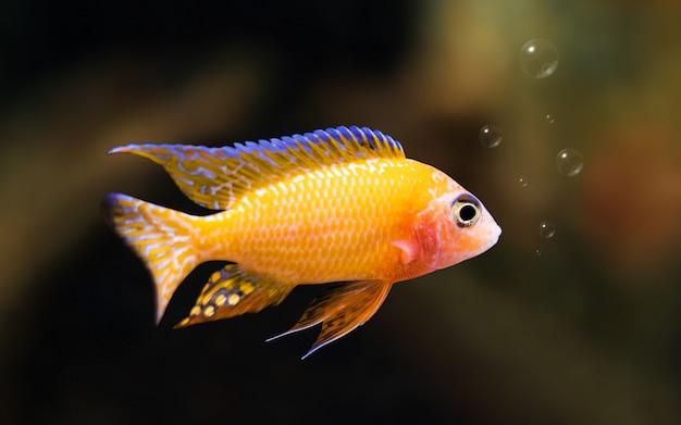 泡と水中の背景にカラフルな魚。自由の概念 Premium写真