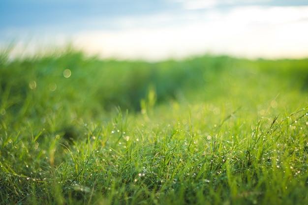 美しい自然の背景 Premium写真