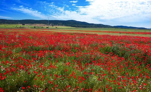 春の牧草地カミノサンティアゴレバンテ Premium写真