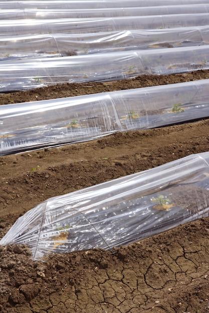 もやし温室ガラスハウスプラスチックライン Premium写真