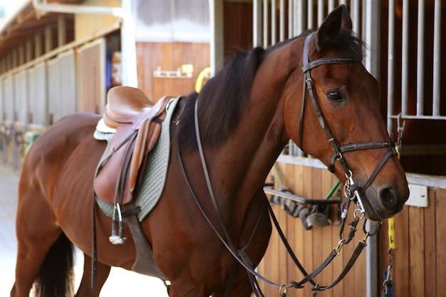 サドルと手綱と茶色の馬 Premium写真