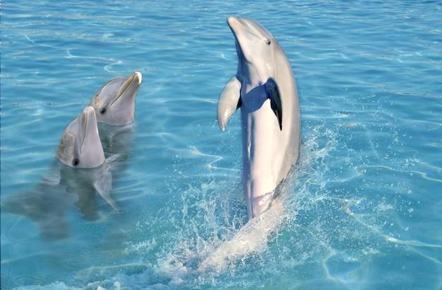 Шоу дельфинов в карибской воде Premium Фотографии