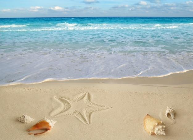 Морские раковины морская звезда тропический песок бирюза карибский Premium Фотографии