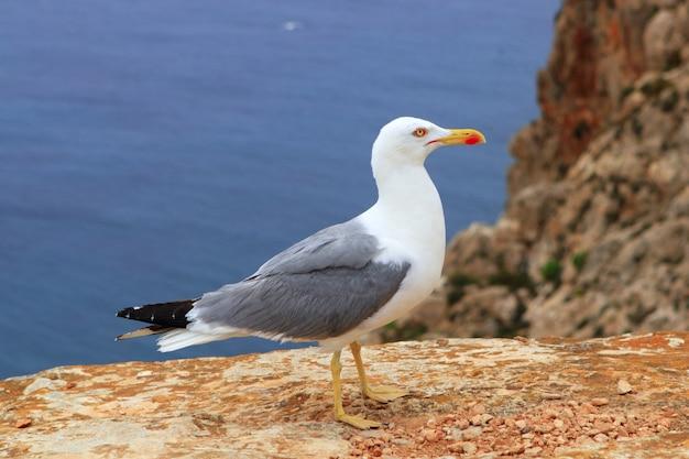 岩が多い海の山でポーズをとって黄色ビル・シーガル Premium写真