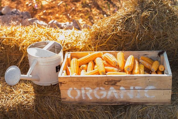 有機農場で乾燥わらとじょうろのトウモロコシ箱 Premium写真