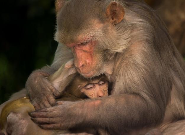 Мать обезьяна обнимает своего ребенка Premium Фотографии