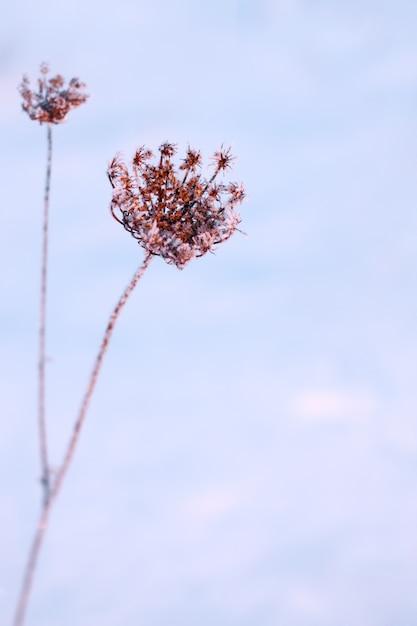 雪の中で乾いた植物 Premium写真