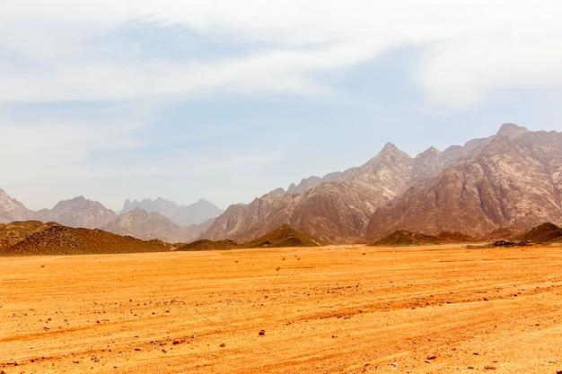 活気のない暑い砂漠 Premium写真