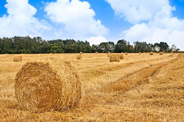 収穫された畑 Premium写真