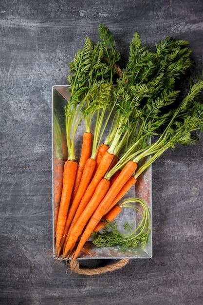 Листья моркови картинки