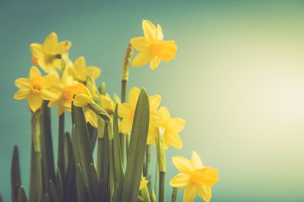 バスケットの素晴らしい黄色い水仙の花。春の背景の画像 Premium写真