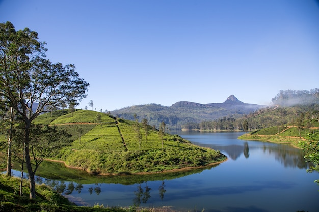 スリランカの美しい風景。川、山々と茶畑 Premium写真