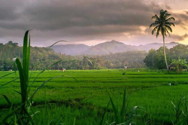 アジアの日の出時間アジアの素晴らしい空とインドネシアの水田での夕日 Premium写真