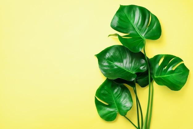 緑のモンステラは黄色の背景に残します。最小限のデザイン。エキゾチックな植物創造的な夏の平干し。ポップアートトレンド Premium写真