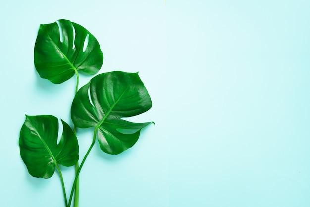 緑のモンステラは青い背景に残します。最小限のデザイン。エキゾチックな植物創造的な夏の平干し。ポップアートトレンド Premium写真