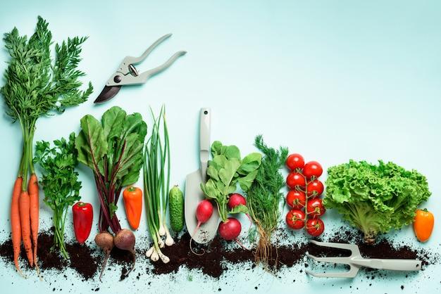 有機野菜とガーデンツールニンジン、ビート、コショウ、大根、ディル、パセリ、トマト、レタスの平面図です。 Premium写真