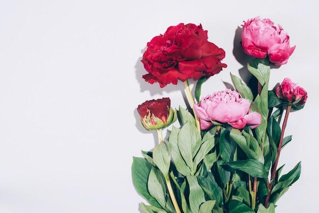 花のフレーム。パステル調の背景にハードシャドウとピンクの牡丹 Premium写真