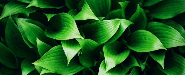 緑の葉のテクスチャです。熱帯の葉の背景。 Premium写真