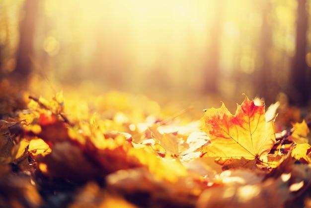 秋の葉の背景 Premium写真