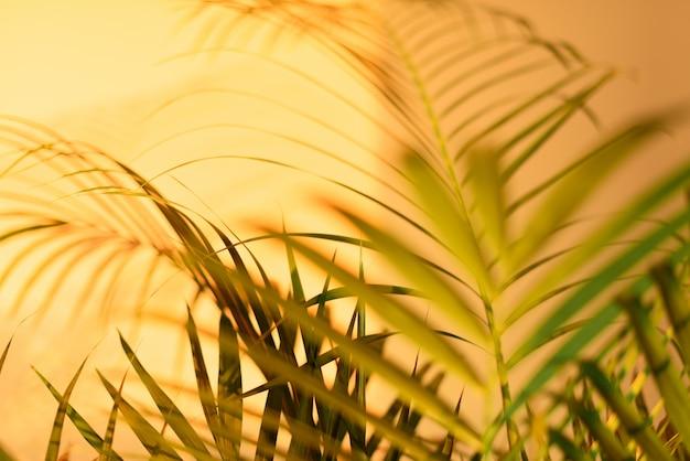 Концепция летних путешествий. тень экзотических пальмовых листьев лежит на фоне пастельных желтых стен. Premium Фотографии