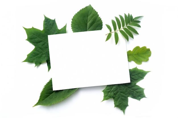 白で隔離される秋のモックアップ緑葉 Premium写真
