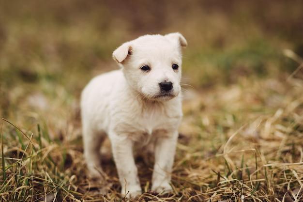 マスターの屋外を待つ若い子犬 Premium写真