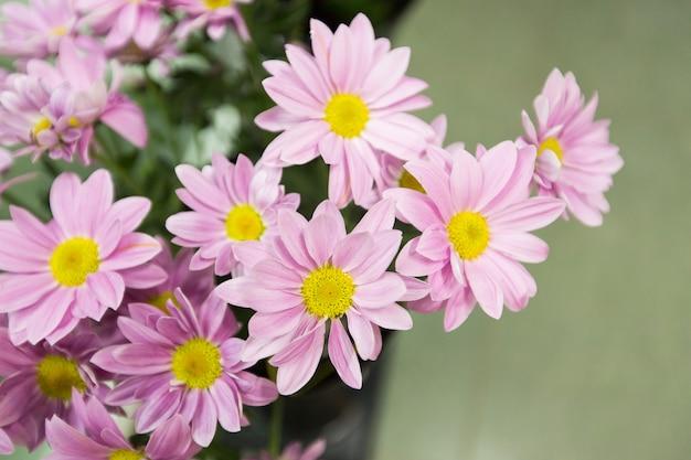 春のピンクの花 Premium写真