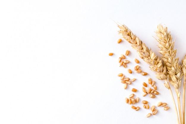 Золотая спелая пшеница на белом фоне Premium Фотографии