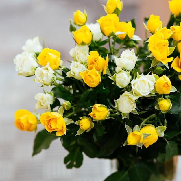 柔らかい色のバラの背景 Premium写真