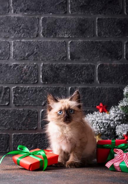 近くの面白い子猫とギフトボックス Premium写真