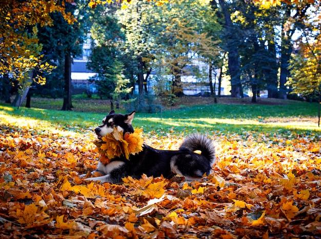 秋の公園で葉を持つかわいい犬 Premium写真