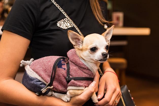 スタイリッシュな女の子の手にファッショナブルな服を着た犬 Premium写真