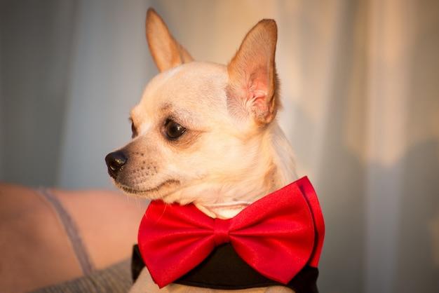 スタイリッシュな服を着た犬。 Premium写真