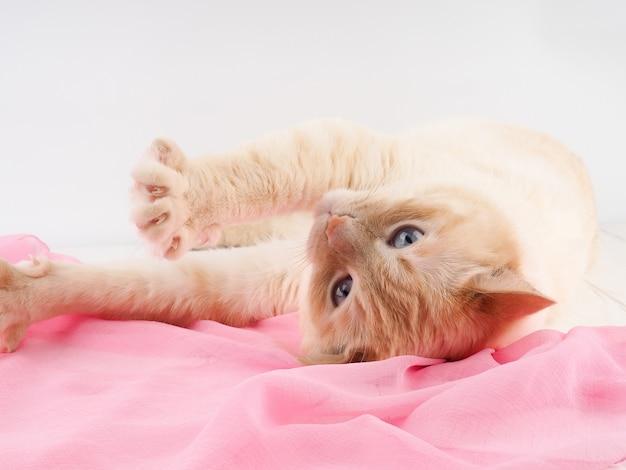 かわいい子猫が眠る Premium写真