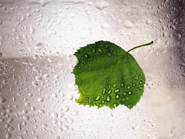 緑の葉の水滴はガラス窓の湿った湿気の環境に落ちます。緑の水ドロップ濡れた水分環境、自然の新鮮な雨の季節の概念 Premium写真