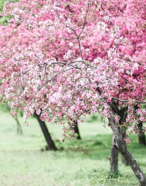 花が咲くピンクの花 Premium写真