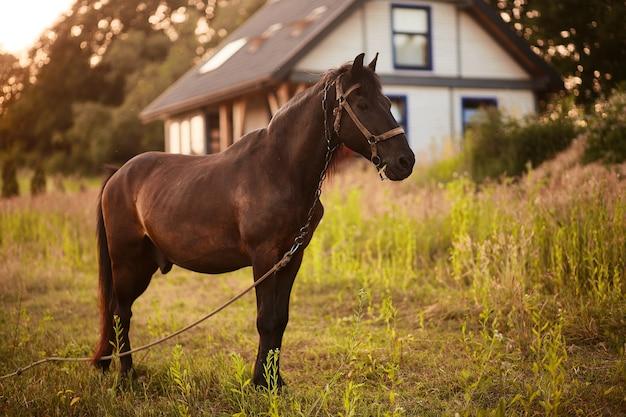 茶色の馬は、家の前に緑の草の上に立つ 無料写真