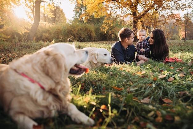 Семья с ребенком и двумя золотистыми ретриверами в осеннем парке Premium Фотографии