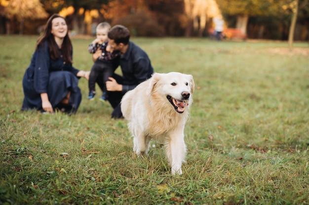Семья с ребенком и золотистый ретривер в осеннем парке Premium Фотографии