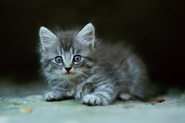小さな素敵なふわふわ子猫 Premium写真