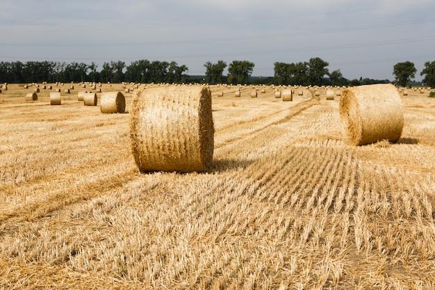 夏にわら俵と収穫されたフィールド Premium写真