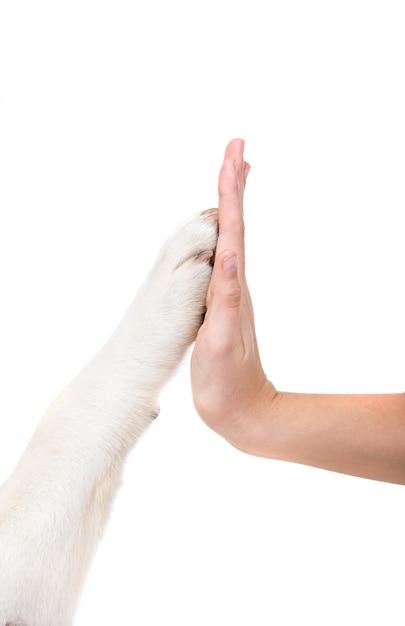 人間と犬は手をつないでいます。犬と人間の友情。 Premium写真