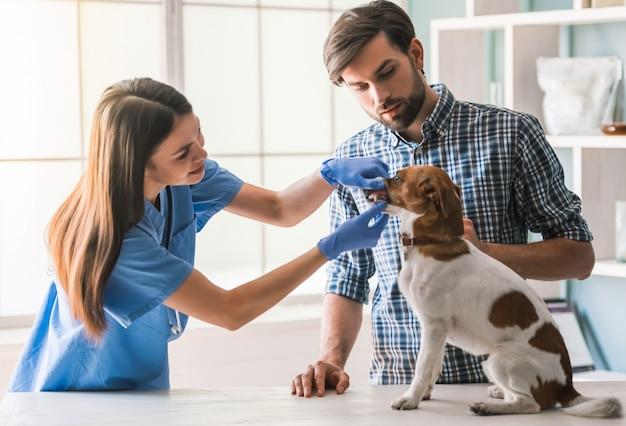 かわいい犬は女性獣医師によって検査されています。 Premium写真