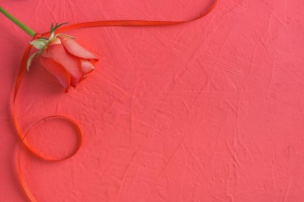 Праздничная композиция из красной розы и ленты на розовом на день святого валентина Premium Фотографии